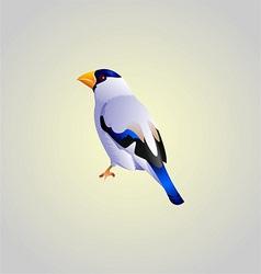 white bird vector image