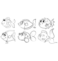 fish Sketches vector image