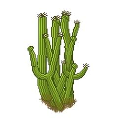 Pixel style cactus vector