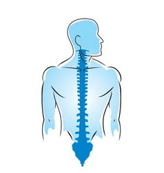Anatomy human spine vector
