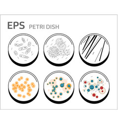 Bacteria cells in petri dishes isolated vector