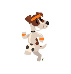 Cute jack russell terrier athlete jogging funny vector