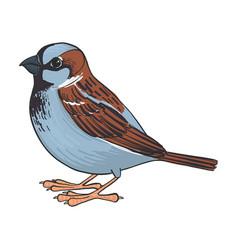 Drawing sparrow vector