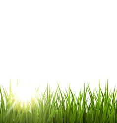Green grass lawn with sunrise on white Floral vector