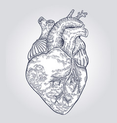 Hand drawn human heart engraved vector