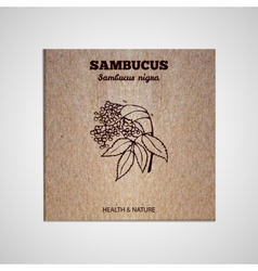 Herbs and spices collection - sambucus vector