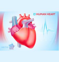 Medical anatomical cardio template vector