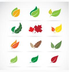 set color autumn fallen leaves on white vector image