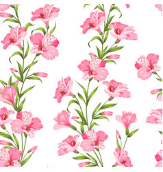 the beautiful alstroemeria vector image