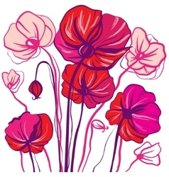 drawing bright red and pink poppy flowers vector image vector image