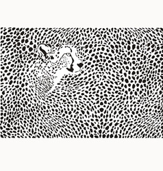 Pattern cheetahs background vector image vector image