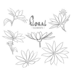 Beautiful flower bud blossoms vector