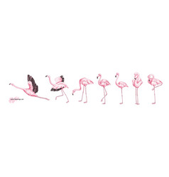 collection pink flamingo in various poses vector image