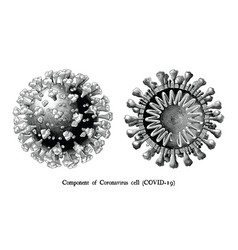 Coronavirus disease 2019 covid-19 component vector
