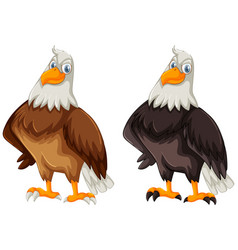 two eagles with brown and black feather vector image