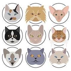 Cat breeds icon set flat style vector