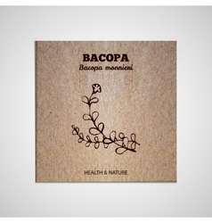 Herbs and spices collection - bacopa vector