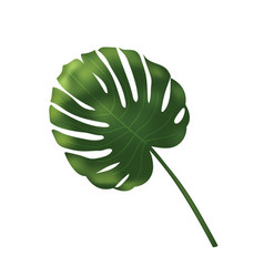 Palm leave jungle leaf set isolated on vector
