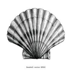 Seashell vintage clip art vector
