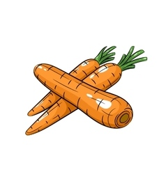 carrot on white background vector image