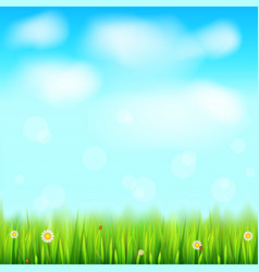 summer landscape background green natural grass vector image vector image