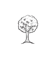 fruit tree hand drawn sketch icon vector image