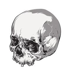 Skull vecstor art vector