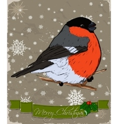 Christmas card with bullfinch vector image vector image