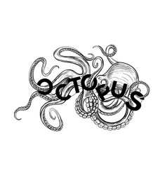 black sketch octopus twisted with word octopus vector image