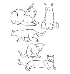 Cat line on a white background 06 vector