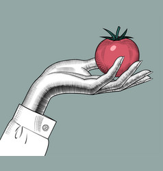 Female hand holding a red tomato vector