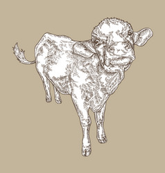 hand drawn cow vintage farm animal design vector image
