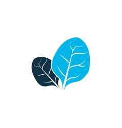 Sorrel icon colored symbol premium quality vector