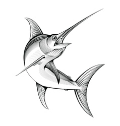 Swordfish engraving vector