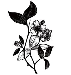 Tea plant vector image