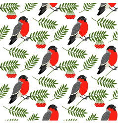 bullfinch and rowan berries pattern vector image