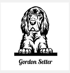gordon setter - peeking dogs - breed face head vector image