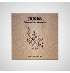 Herbs and Spices Collection - Jojoba vector