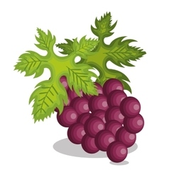Icon grape design vector