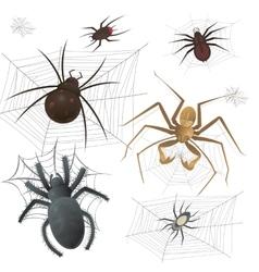 set spiderweb with spiders vector image