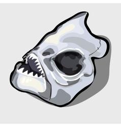 Cranial bone fish head ancient toothy creatures vector image vector image