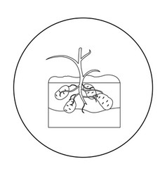 Potato icon outline single plant icon from the vector
