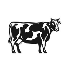 spotted cow isolated on white background dairy vector image