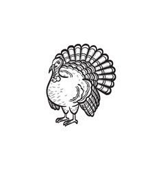 Turkey hand drawn sketch icon vector