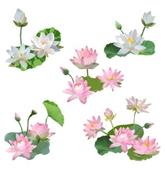 Vintage Waterlily Flowers Bouquete Set vector
