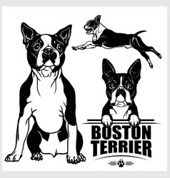 Boston terrier dog - set isolated vector