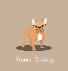 French bulldog pet cartoon standing design vector