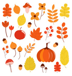 autumn set with leaves berries mushrooms vector image