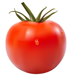 Tomato isolated vector image