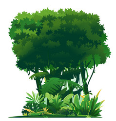 Tropical forest isolated vector